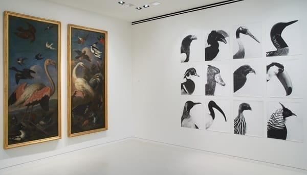 Vue d'exposition Bartolomeo Bimbi / Jochen Lempert Crédit photo : NMNM/Mauro Magliani & Barbara Piovan, 2012