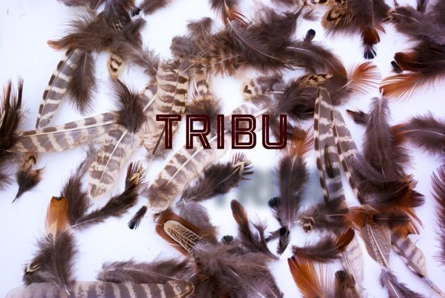 visuel tribu