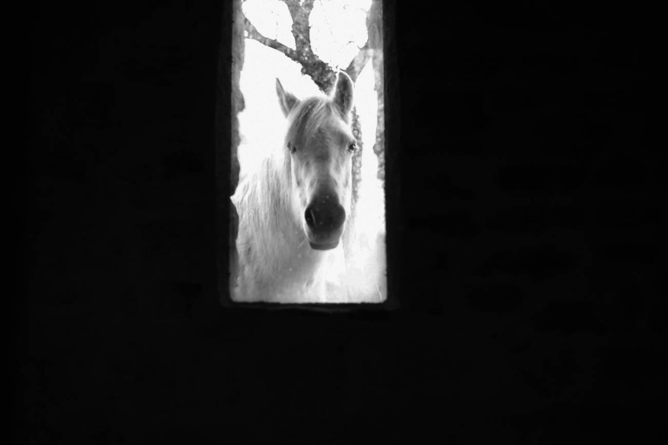 Cheval Blanc devant l'œuvre de Andy Goldworthy, Refuge d'Art du Vieil Esclangon, arrêt sur image, Second plan, 2021